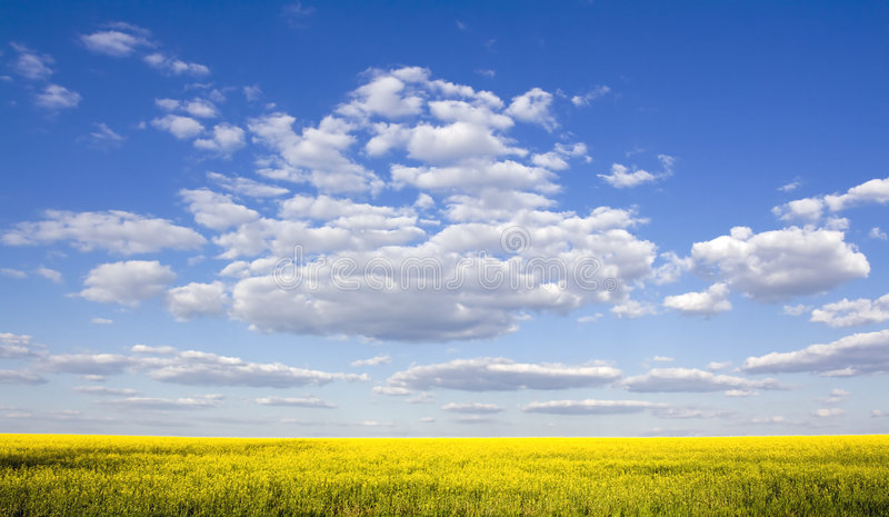 Beautiful field and clear blue sky. As background royalty free stock photography