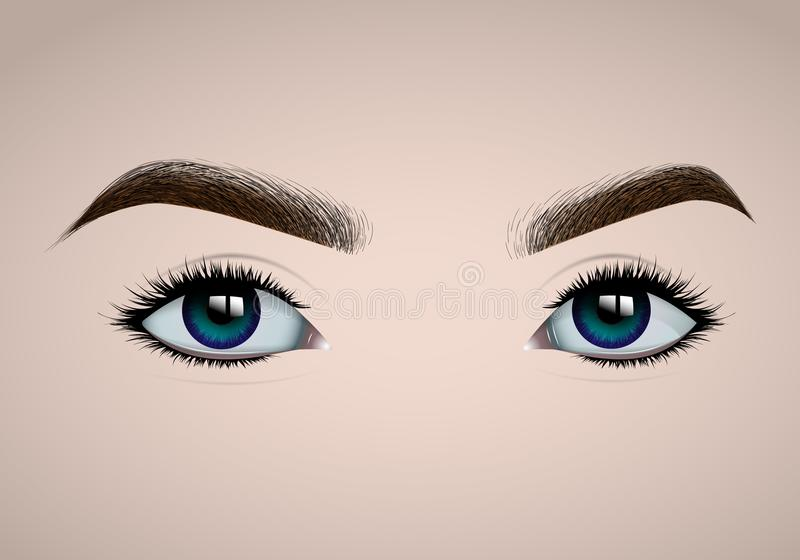 Beautiful realistic female eyes and eyebrows for fashion design royalty free illustration