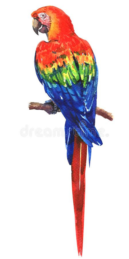 Beautiful red, blue, green Scarlet Macaw, Ara parrot on branch, colorful exotic bird, isolated, hand drawn watercolor vector illustration