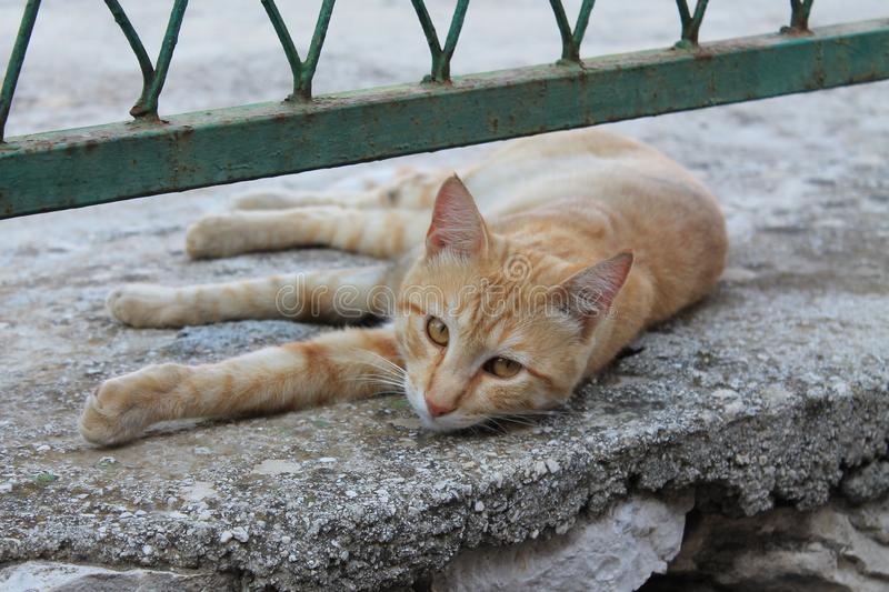Red cat under the fence stock image