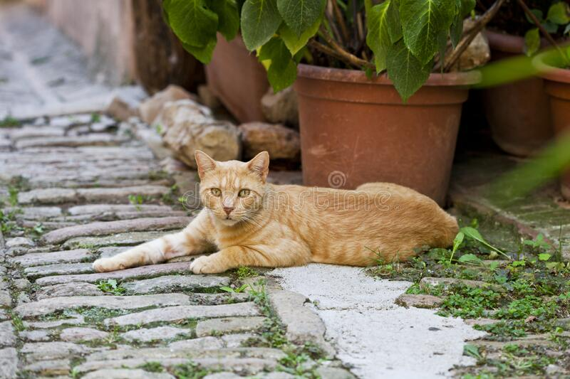 Beautiful red cat in a small Italian town stock photos