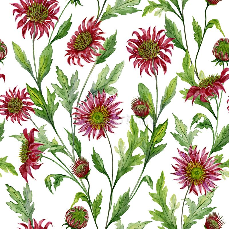 Beautiful red chrysanthemum flowers with green leaves on white background. Seamless botanical pattern. Watercolor painting. Hand painted floral illustration royalty free illustration