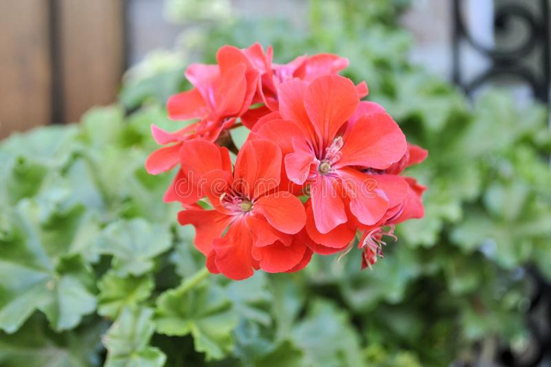 Beautiful red closeup flowers nature romantic garden still life stock photos