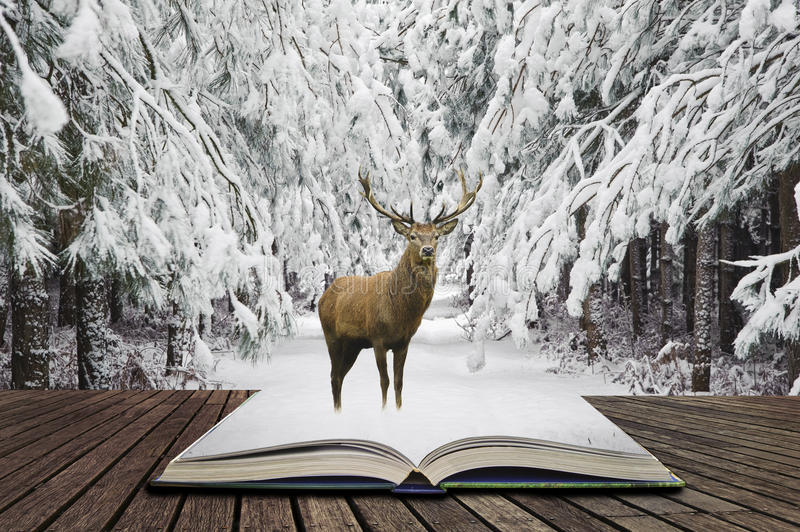 Beautiful red deer stag in snow covered festive season Winter forest landscape concept coming out of pages in open book. Beautiful red deer stag in snow covered stock images