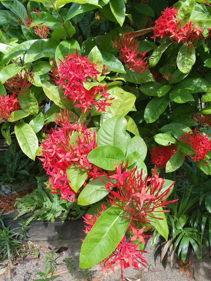 Beautiful red flowers royalty free stock image