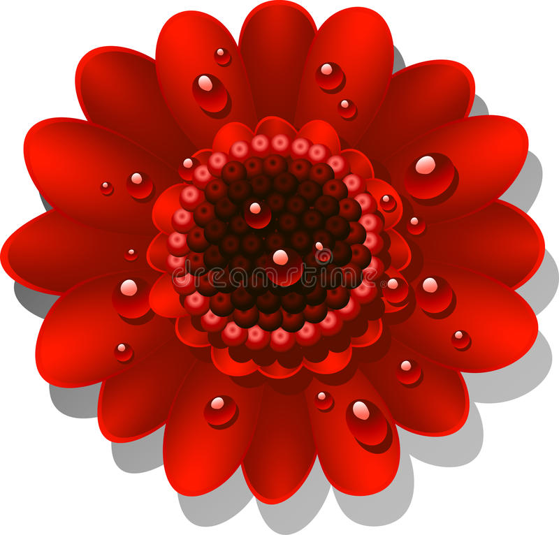Beautiful red Gerber Daisy