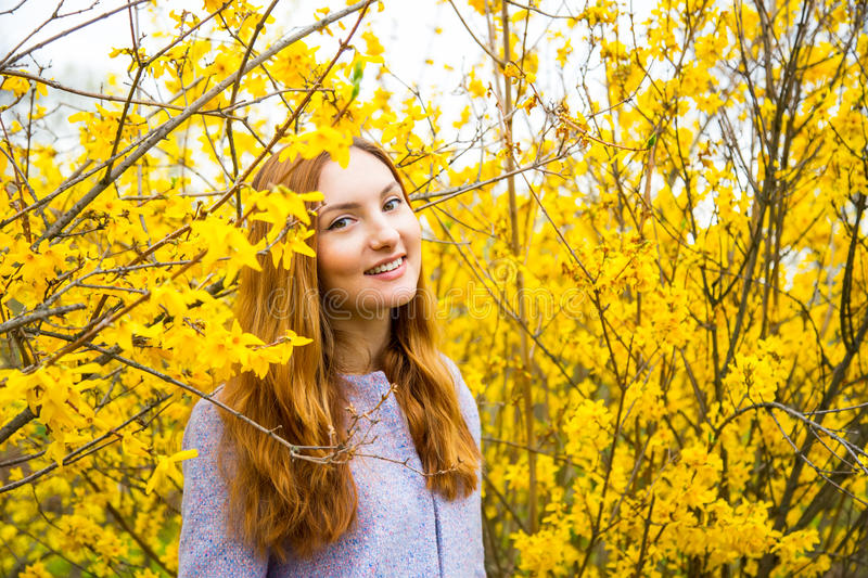 Beautiful red-haired young woman standing near blooming Forsythia bushes in spring garden. Close-up portrait of beautiful red-haired young woman standing near royalty free stock photography