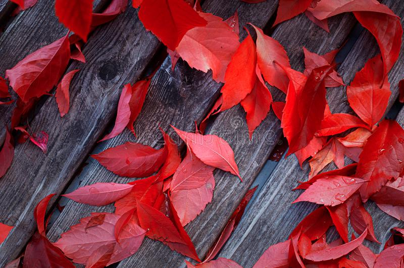 Beautiful red leaves on the wooden background. Autumn wallpaper. Top view stock image