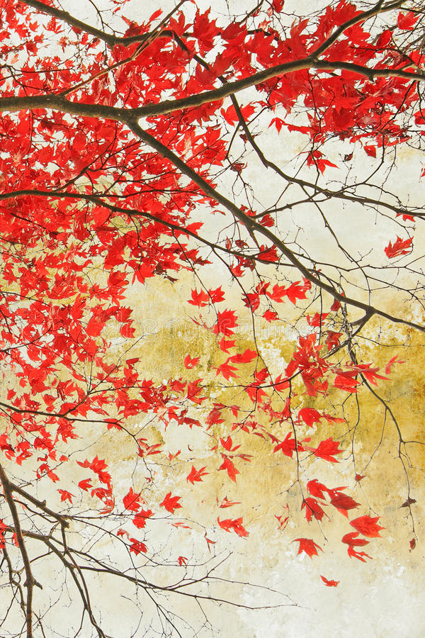 Beautiful red maple grungy background royalty free stock image