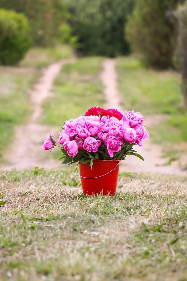 Bucket With Beautiful Peony Flowers Stock Image - Image of ...