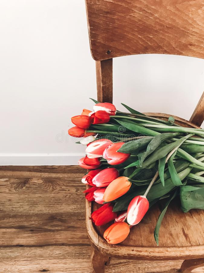 Beautiful red and pink tulips on stylish wooden rustic chair in home. Hello spring concept. Countryside living. Modern rural still royalty free stock photography