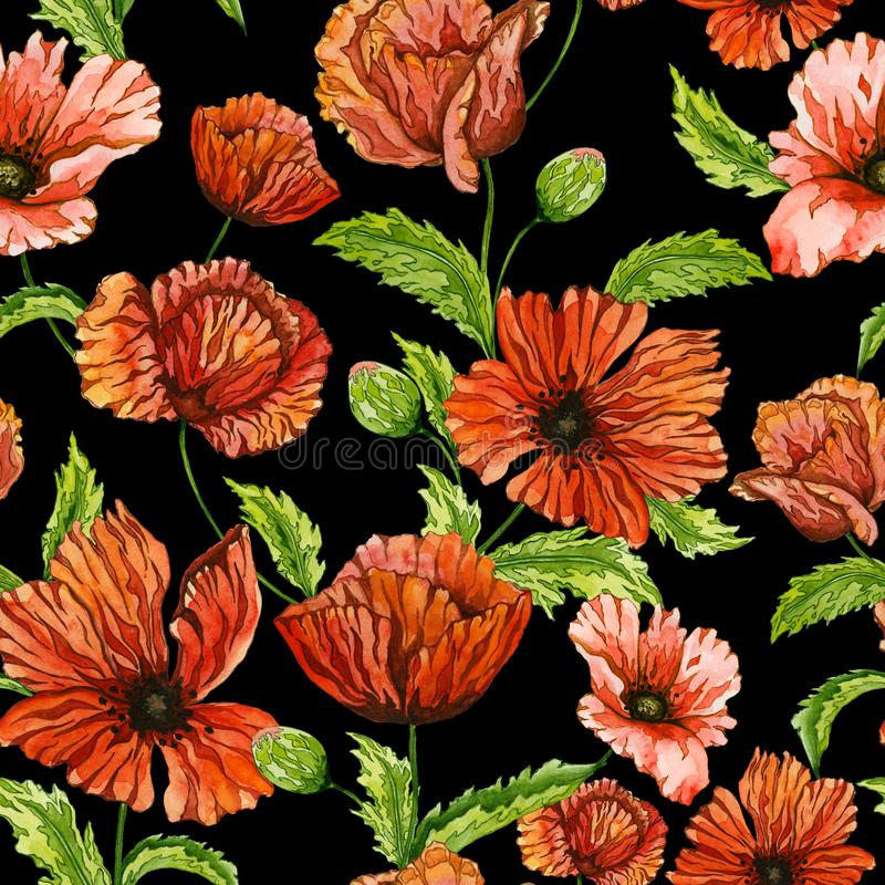 Beautiful red poppy flowers on green stems with leaves on black background. Seamless vivid floral pattern. Watercolor painting. royalty free illustration