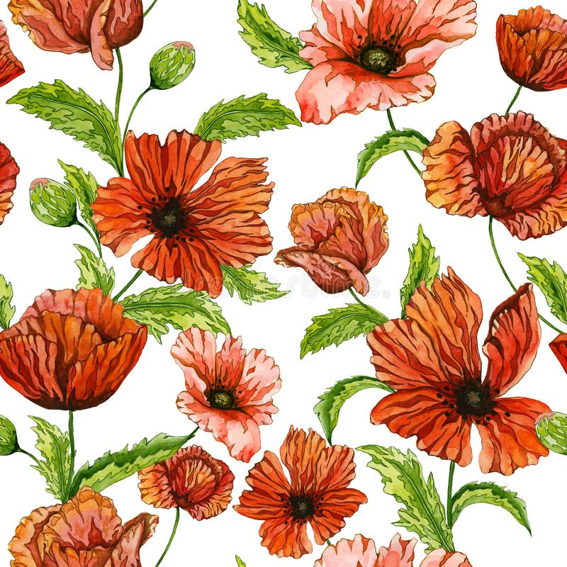 Beautiful red poppy flowers on green stems with leaves on white background. Seamless floral pattern. Watercolor painting. royalty free illustration