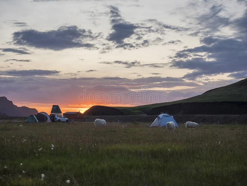 Beautiful red purple sunrise in Landmannalaugar mountain at camp site area with grazing sheep and tents. Fjallabak royalty free stock image