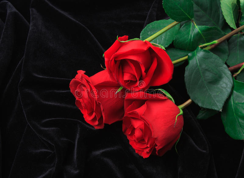 Beautiful red rose on black satin stock photo