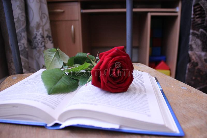 Beautiful Red Rose With Pearl Beads On A Beige Background ...