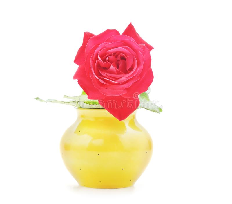 Beautiful red rose in the vase. On a white background stock images