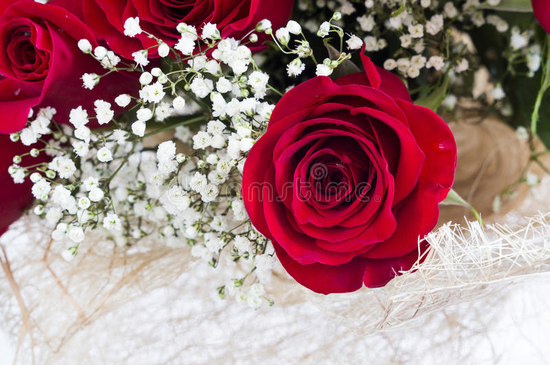 Beautiful red roses stock photo. Image of blossom, rose - 86254550