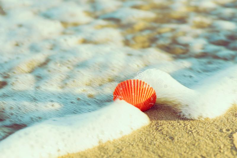 Beautiful red round sea shell on shore beach sand washed by foamy sea water in golden sunlight. Summer vacation travel wanderlust. Relaxation harmony concept royalty free stock image