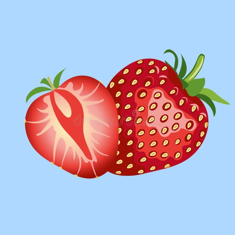 Beautiful red strawberry illustration. Strawberry fruit isolated. Blue background royalty free illustration