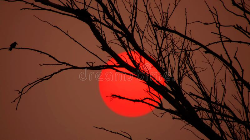 Beautiful Red sun behind the tree. royalty free stock images