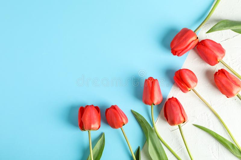Beautiful red tulips on two tone background. Space for text stock image