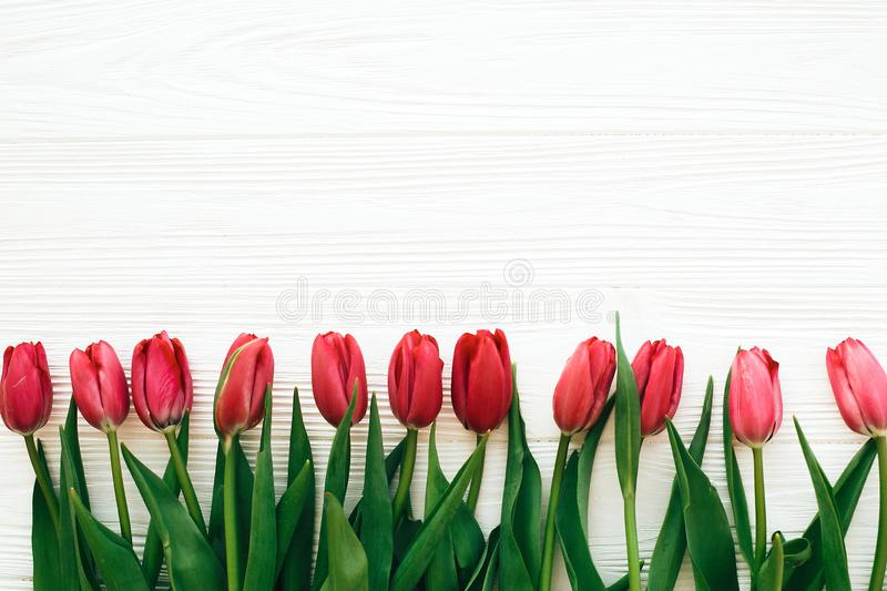 Beautiful red tulips on white wooden background flat lay. Happy mothers day. Pink tulips border on white wood with space for text royalty free stock photo