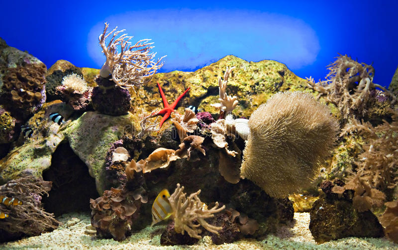 Beautiful reef royalty free stock photography
