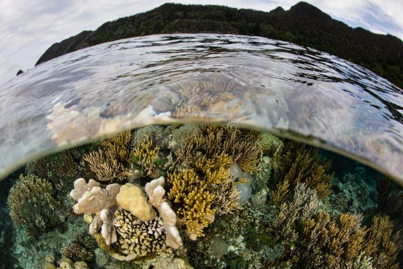 Beautiful Reef in Wayag, Raja Ampat stock image