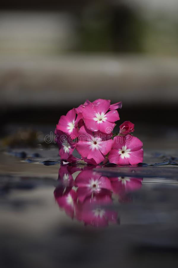Flowers and reflection stock photo