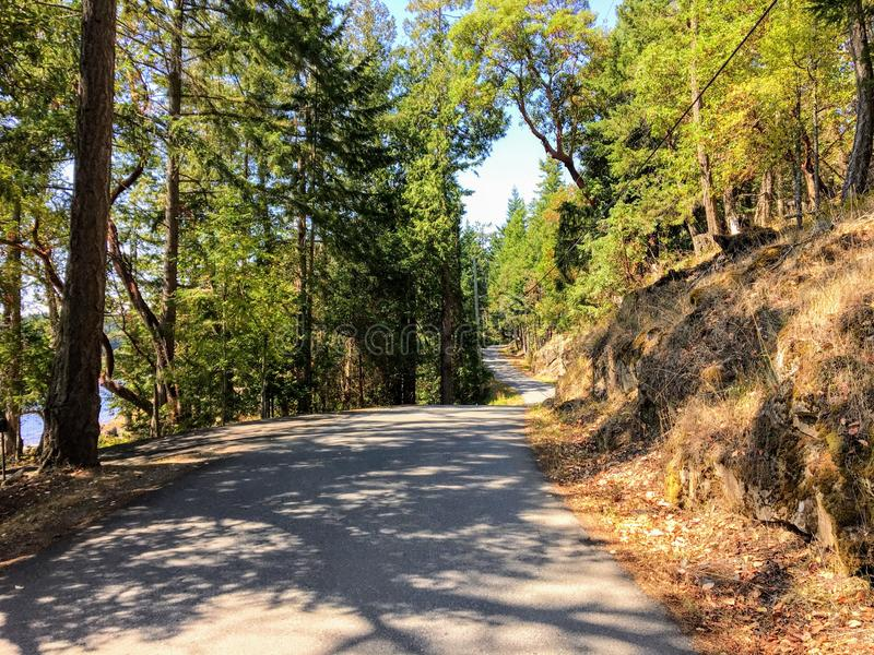 A beautiful remote back country road with no cars on it. Surrounded by forest and trees. royalty free stock images