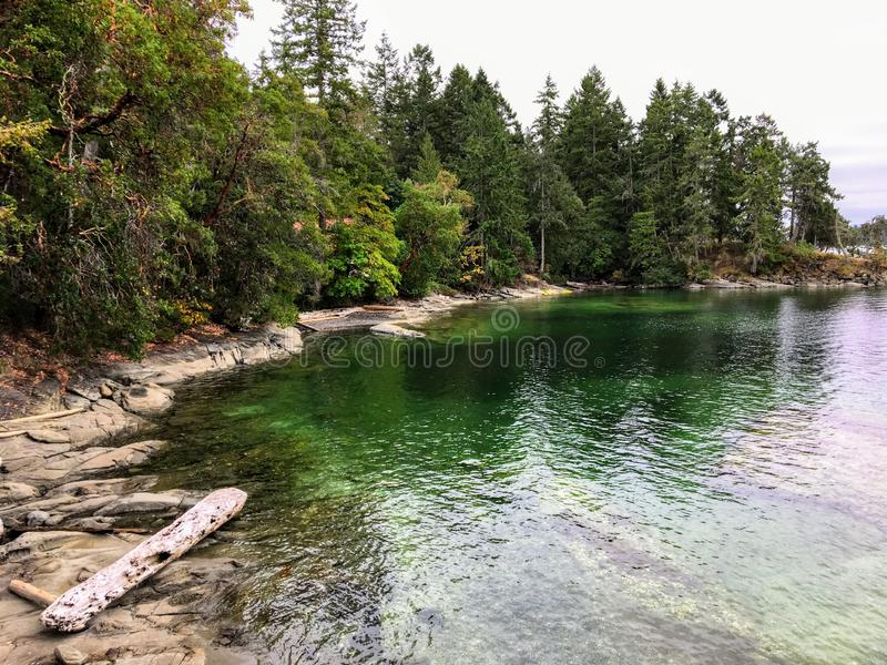 A beautiful remote shoreline covered by evergreen forest and a rocky shore.  The colour of the shallow ocean water is a dark green. It is a beautiful nature royalty free stock photo