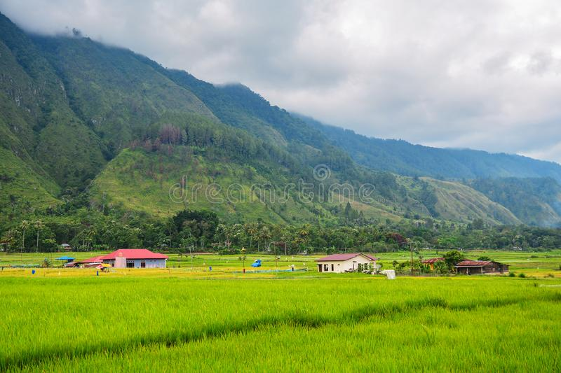 Beautiful Rice field view of Lake Toba, Samosir Island, North Sumatra, Indonesia stock image