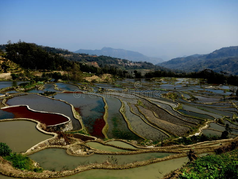 Beautiful rice terraced fields of Hani ethnic people in Yuanyang royalty free stock images