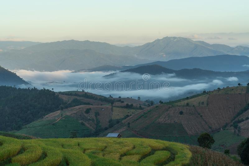 Beautiful rice terraces in the morning stock image