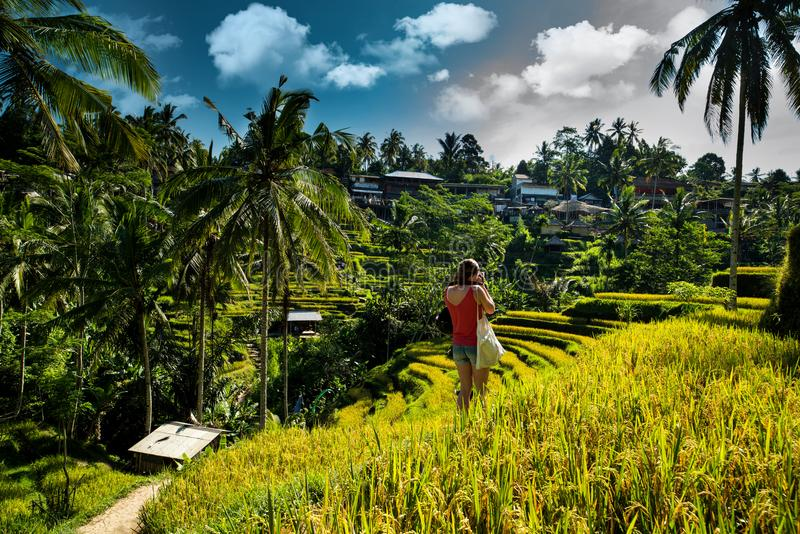 Rice fields and photographer girl. Ubud, Bali, Indonesia. stock photos