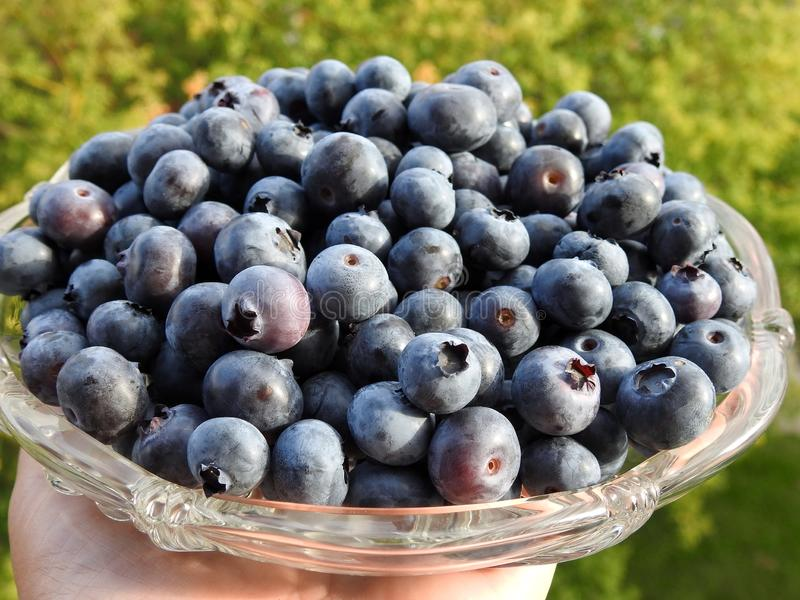 Beautiful ripe blueberry in plate ,Lithuania stock photo