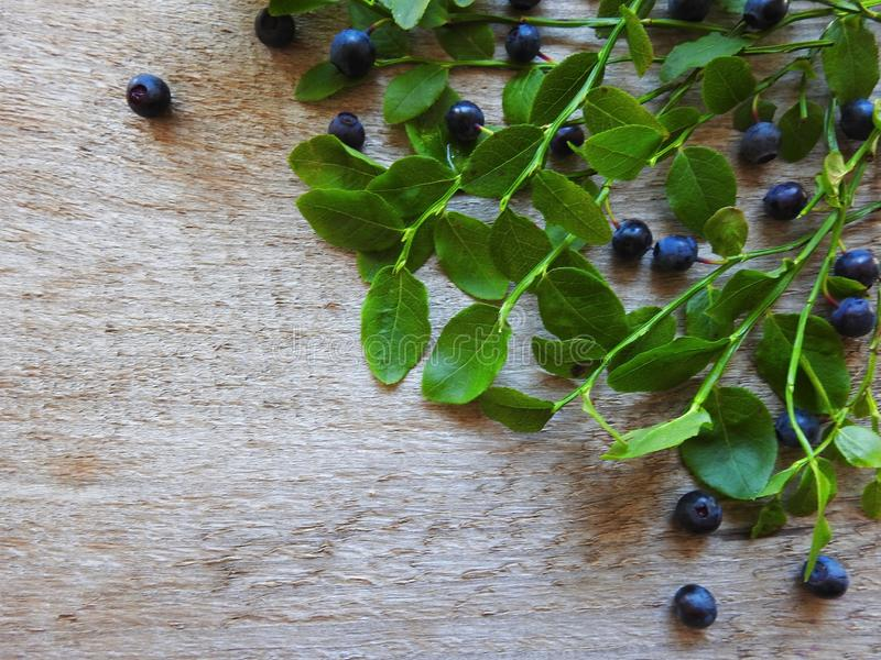 Beautiful ripe blueberry on wooden surface, Lithuania royalty free stock photo