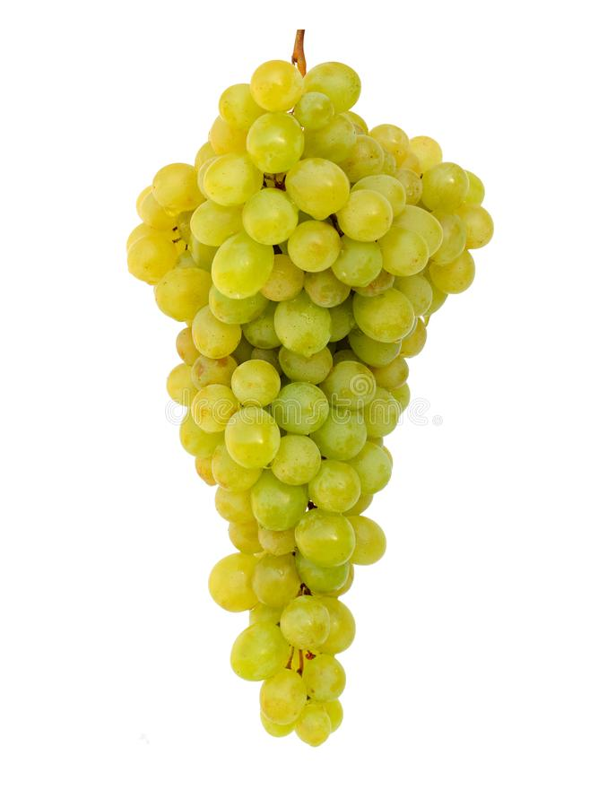 Beautiful ripe washed wet bunch of yellow grapes isolated on white, ready to eat stock photography