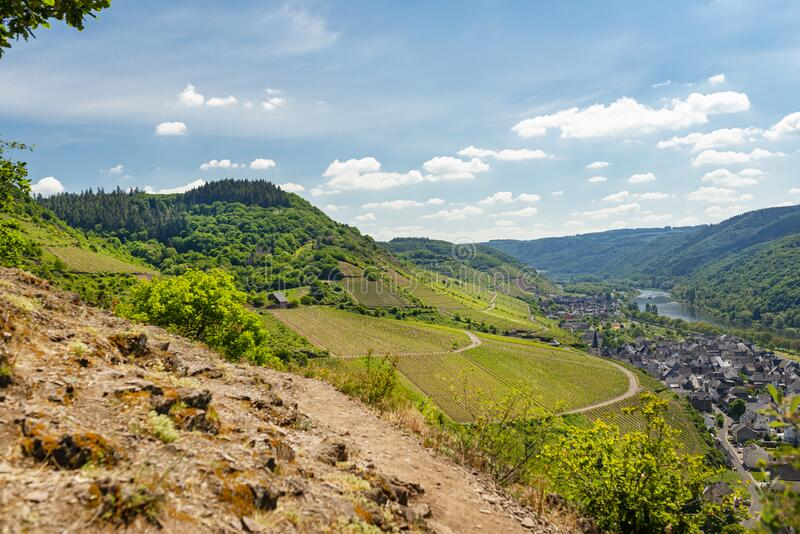 Beautiful, ripening vineyards in the spring season in western Germany, the Moselle river flowing between the hills. In the backgro. Und of blue sky and white royalty free stock images