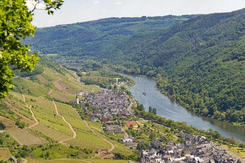 Beautiful, ripening vineyards in the spring season in western Germany, the Moselle river flowing between the hills. In the backgro. Und of blue sky and white royalty free stock photography