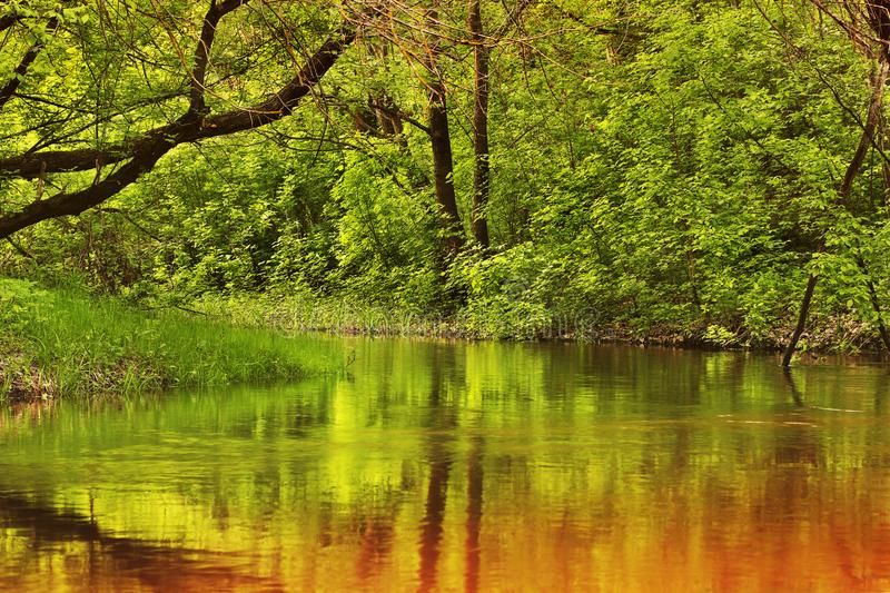 Beautiful river in the forest. Reflection of trees in the water royalty free stock photos