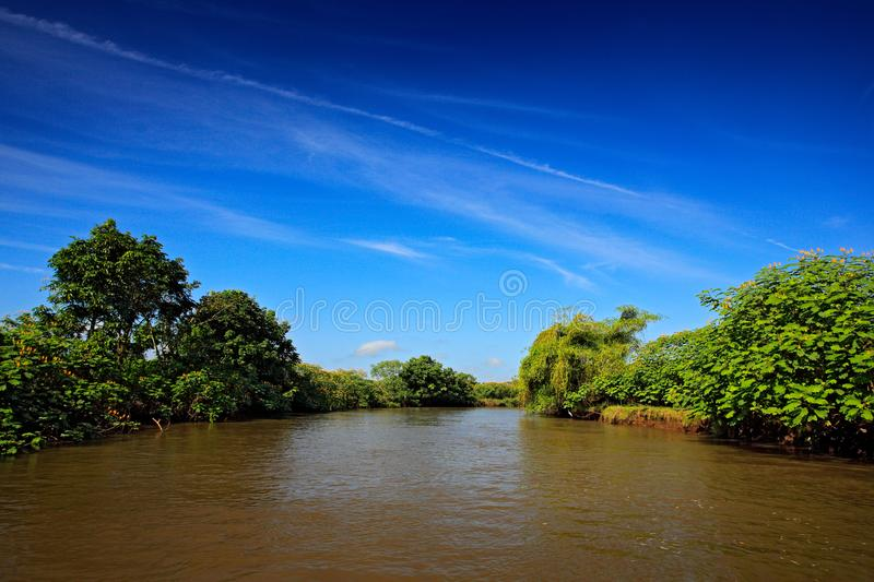 Beautiful river landscape from Costa Rica. River Rio Frio in the tropic forest. Stones in the stream. Trees above the water. Summe. R river royalty free stock images