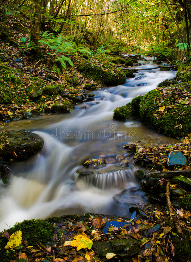 Beautiful River Forest #7005180 |Beautiful River Photography