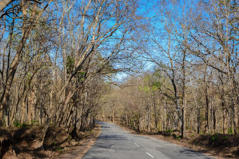 Forest road in a sunny autumn day stock photos