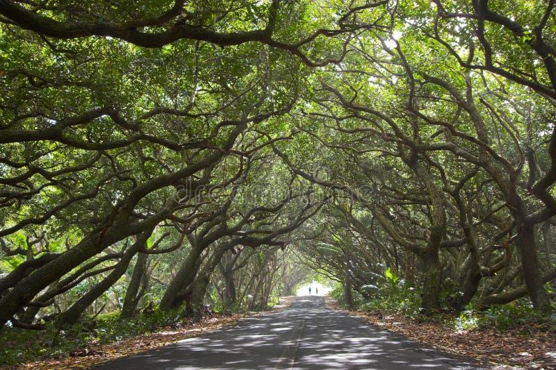 Download Beautiful road and bikers stock photo. Image of road, biking - 9651948