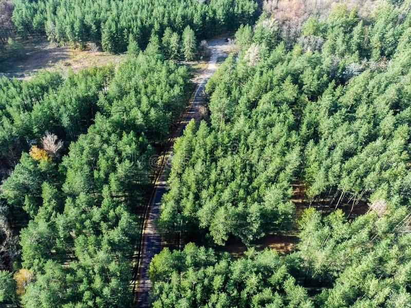 Beautiful road through evergreen pine forest on bright sunny day. Eco tourism and travel concept. Aerial drone virew stock photo