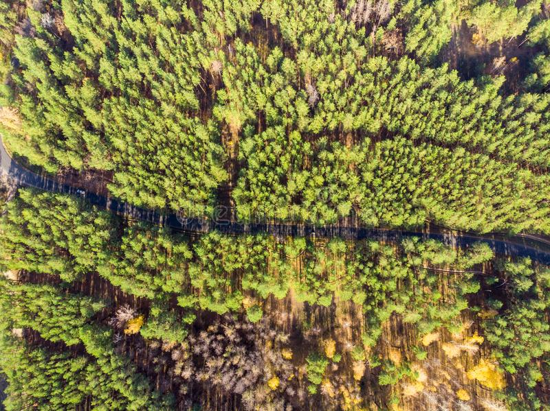 Beautiful road through evergreen pine forest on bright sunny day. Eco tourism and travel concept. Aerial drone virew royalty free stock photography