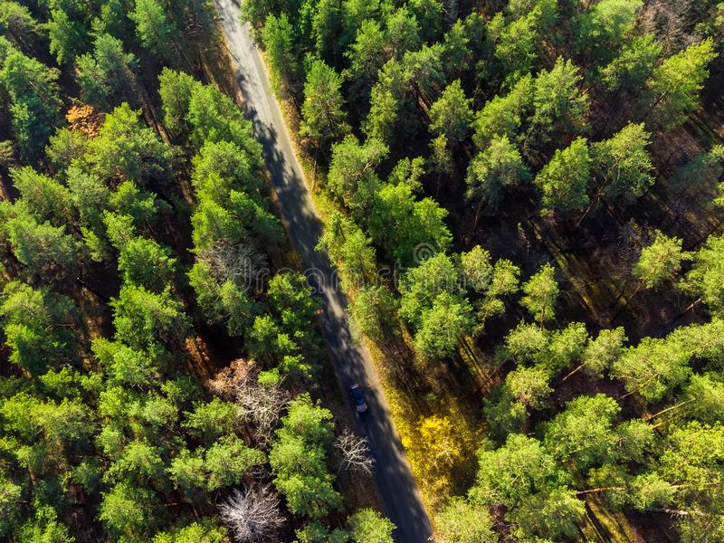 Beautiful road through evergreen pine forest on bright sunny day. Eco tourism and travel concept. Aerial drone virew royalty free stock photos