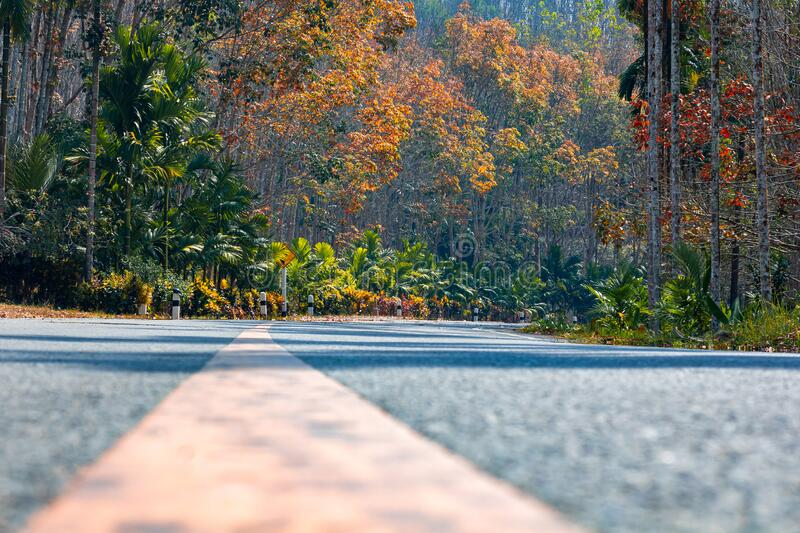 Beautiful road with Fall colors in the trees. Spring time stock images